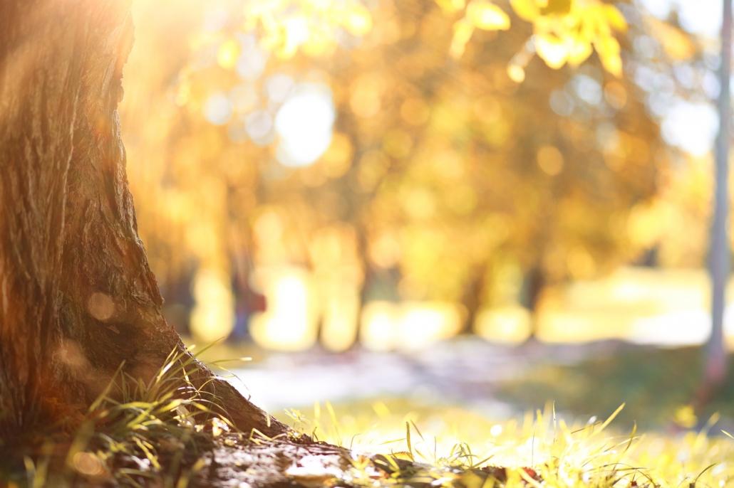 Stille im Herbst